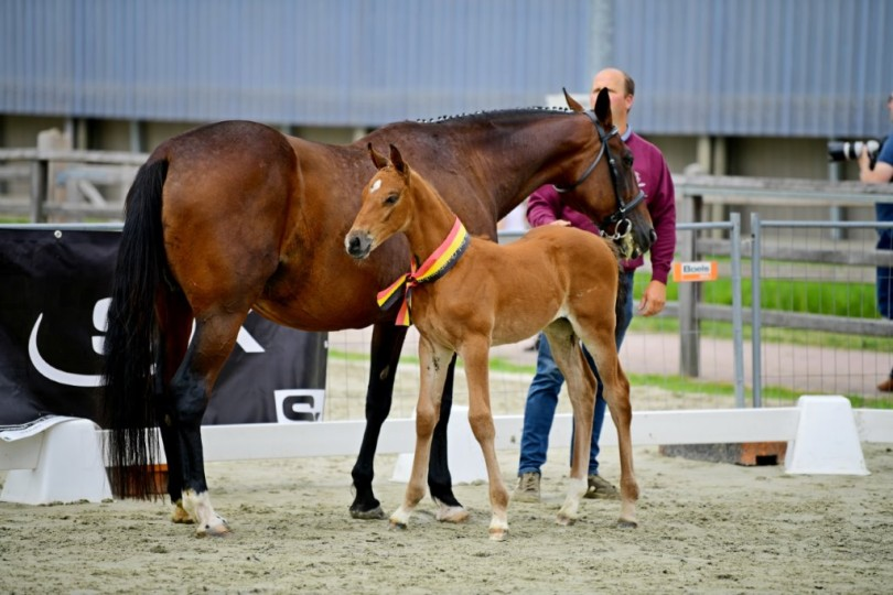 Daughter of Calleryama wins Flemish foal championship 2021